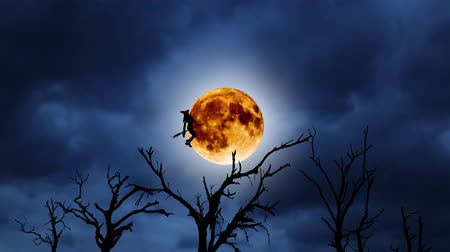 boszorkány : Silhouette of a young witch flying on a broomstick against the background of the orange moon. Halloween. Over old trees Stock mozgókép