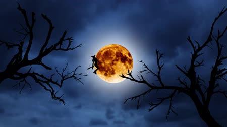 flying witch : Silhouette of a young witch flying on a broomstick against the background of the orange moon. Halloween. Over old trees Stock Footage