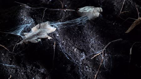 ogród : Soil leaves and cobwebs in the night forest. Halloween background