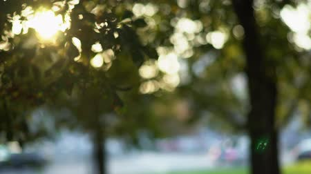 desfocado : Abstract lights leaves are moving in the park and passing cars are visible bokeh background Stock Footage