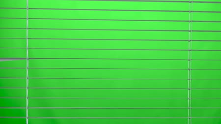 alarmed : White jalousie open and close. Green screen