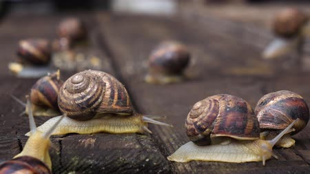 lerdo : Many live snails creep the friend on the friend