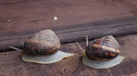 lerdo : Couple of snail is creeping