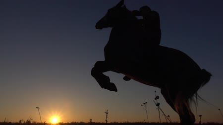 Horseman sits on a horse and gives him two legs in sunset . Slow motion. Silhouette. Side view Dostupné videozáznamy