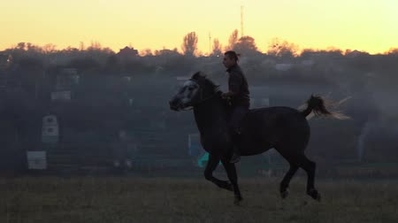 Guy at sunset jumping on a stallion . Slow motion. Side view Dostupné videozáznamy