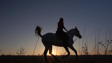 Silhouette woman with horse on field. Slow motion Dostupné videozáznamy