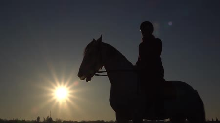 Woman on a horse outdoors female rider is on a horse in the field . Silhouette. Slow motion Dostupné videozáznamy