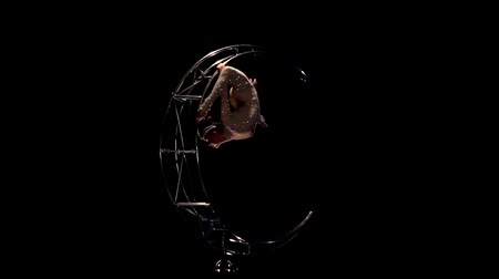 танцоры : Girl rotating design in the form of a moon. Black background. Slow motion Стоковые видеозаписи