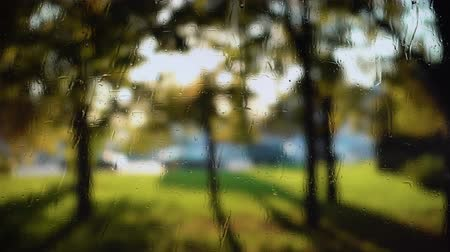 нечеткий : Blurred background with fresh green leaves waving in wind behind rainy window