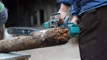 hnijící : Cutting a rotten log with electrical chainsaw.