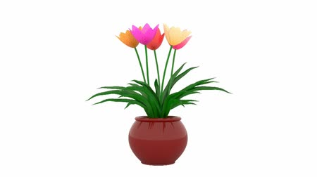 jardim : Tulips growing in a pot