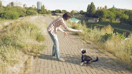 dog sitter : Young woman training jump trick a little cute dog outdoors and giving treats after correct command execution. Enjoying of active healthy walk with pet at summer sunny day on city background. Stock Footage