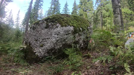 кедр : 4K time-lapse in motion big rock rock in grass and fern with garbage