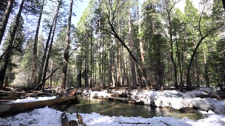 nevada : Merced river with snow and forest at Yosemite National Park, California, USA Stock Footage