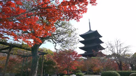 autumn : Beautiful fall color of To-ji at Kyoto, Japan