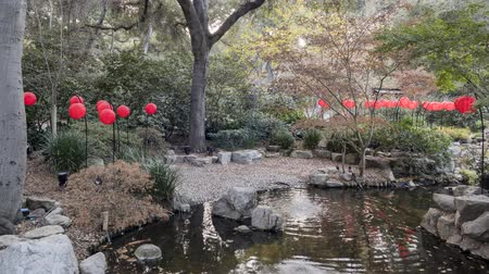 tava : Timelapse footage of many red lantern in Japanese garden of Descanso Garden, for the light up event