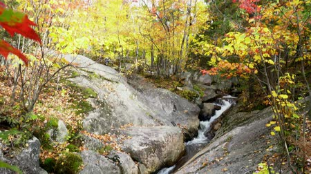 venkovský : Beautiful fall color of Mont-Tremblant National Park at Quebec, Canada Dostupné videozáznamy