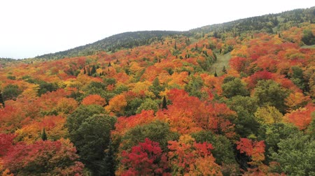 посещающий : Aerial fall color view of the Massif du Sud Regional Park at Quebec, Canada