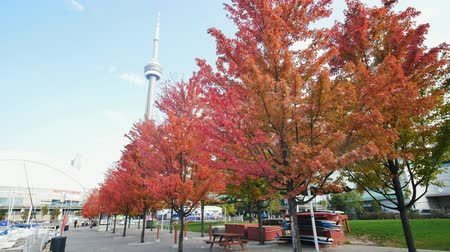 canadien : Looking up the CN Tower with lovely red maple leaves at Toronto, Canada