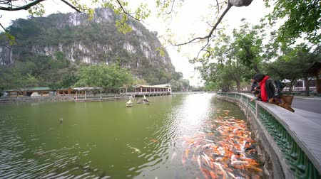 yedi : Zhaoqing, DEC 30: Family of 4 feeding Chinese koi fish around Seven-star Crags Scenic Area on DEC 30, 2018 at Zhaoqing, China Stok Video