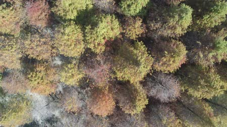 subúrbio : Aerial view of the Taxodium distichum in fall color with red, orange leaves and reflection at Yuanli Township, Taiwan