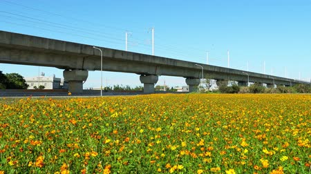mei : Wild flower bloom with Taiwan Highspeed Rail behind at Yang Mei, Taiwan