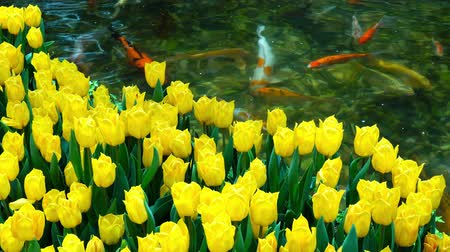 artificial flower : Many yellow tulips blossom with artificial waterfall behind at Las Vegas, Nevada