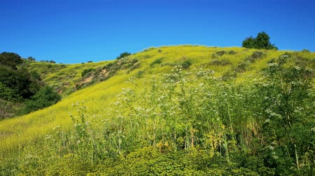 hacienda : nature landscape around Peter F. Schabarum Regional Park at Hacienda Heights, California Stock Footage