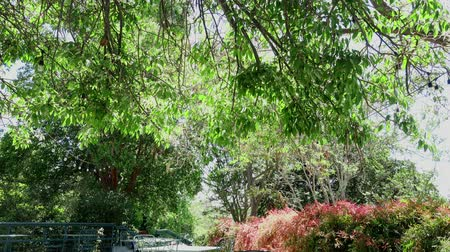 meio dia : Noon view of nature scene in a beautiful park at Los Angeles, California