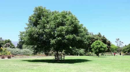 полдень : Noon view of nature scene in a beautiful park at Los Angeles, California