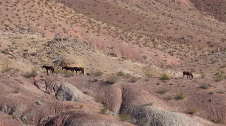 valley of fire : Wild horse standing around Lake Mead National Recreation Area at Nevada Stock Footage