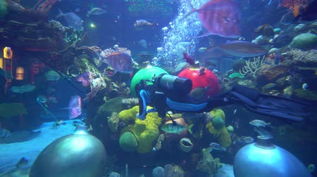 ラスベガス : Las Vegas, DEC 29: Huge fish tank inside the Silverton Casino Hotel on DEC 29, 2019 at Las Vegas, Nevada 動画素材