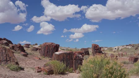 fosilní : Beautiful landscape of Petrified Forest National Park at Arizona Dostupné videozáznamy