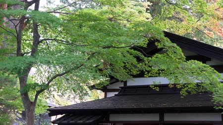 samoerai : Kakunodate, OCT 21: Exterior view of the Kakunodate Samurai House on OCT 21, 2019 at Kakunodate, Japan