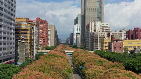 daan : Afternoon aerial view of the Taiwanese rain tree blossom and cityscape of Daan District area, Taipei, Taiwan