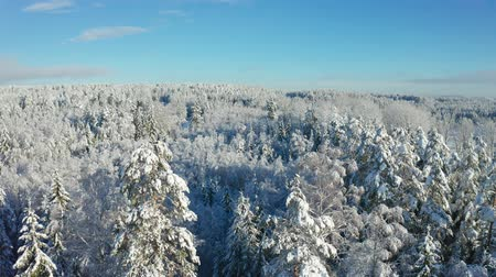Fly above epic snow covered forest in cold winter at daytime