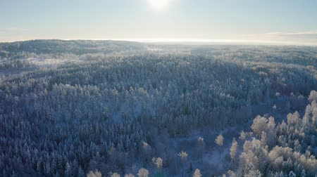 Flying high above epic snow covered forest in cold winter landscape