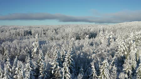 Flying above epic snow covered forest in cold winter landscape