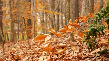 gałązki : Autumn leaves cover a wooded area close to a road. Wideo
