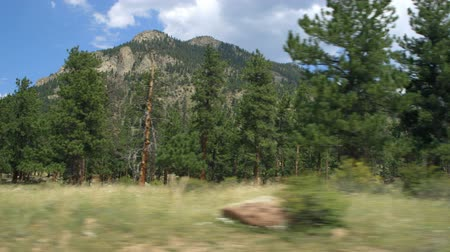 кустарник : Driving past spruce and pines with foothills of the Rocky Mountains in that national park. Стоковые видеозаписи