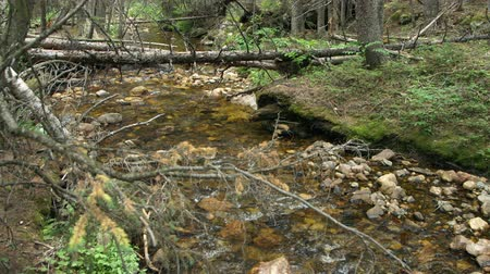 ribeiro : A shallow wilderness stream or brook in Rocky Mountain National Park. Stock Footage