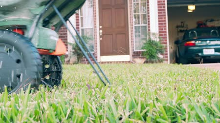trabalhador manual : Homeowner fertilizing his lawn using a small manually operated fertilizer spreader. Slow motion.