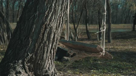 dead tree : Empty baby swing on the tree sways from the wind Stock Footage