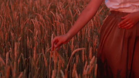 blue and yellow : Young beautiful woman walking in a wheat field. Hand of a young girl touching corn ears in a field at sunset. Stock Footage