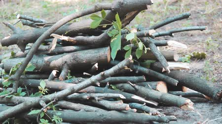 picado : Sawn tree branches lie in a heap. On the ground there is a hill of small round logs. Logging firewood. Pruning trees. Broken branches on the green grass. Young shoots