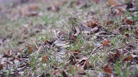sways : Dry autumn leaves and blades of grass in a meadow in late autumn. Wind sways blades of grass and dead wood