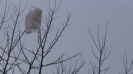 emperrado : Polyethylene bag from supermarket hangs on tree branches. Gone with wind, plastic bag stuck in crown of tree. Serious problem of environmental pollution by non-degradable packaging materials in nature