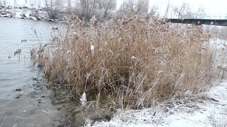 klatka schodowa : Winter nature. Abnormal winter, water flows in the river and does not freeze. There was very little snow. Global warming. Environmental disaster. Copy space.