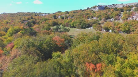 scatters : upper autumn trees scattered on hill terraces under blue sky Stock Footage