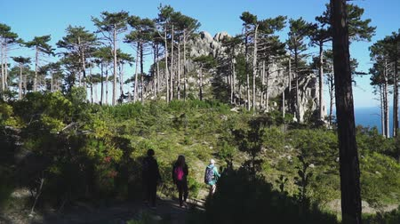 Rear view: Friends with backpacks on their backs follow a path in the forest to mountain